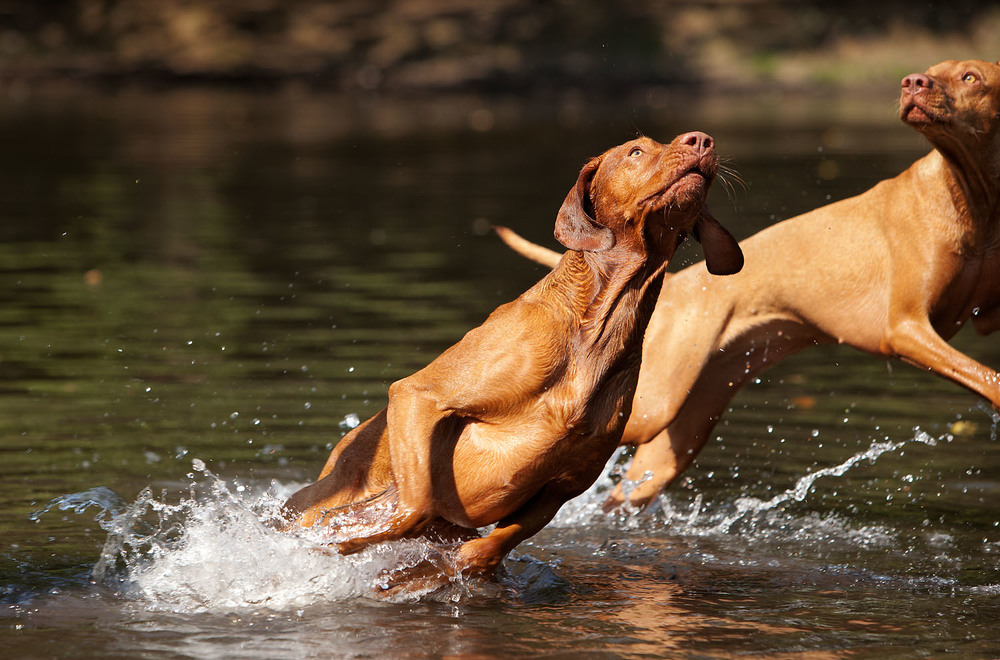 dogs_outdoor_35.jpg
