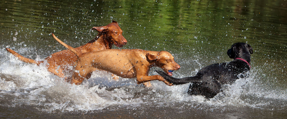 dogs_outdoor_37.jpg