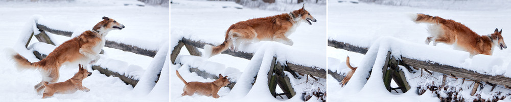 dogs_outdoor_61.jpg