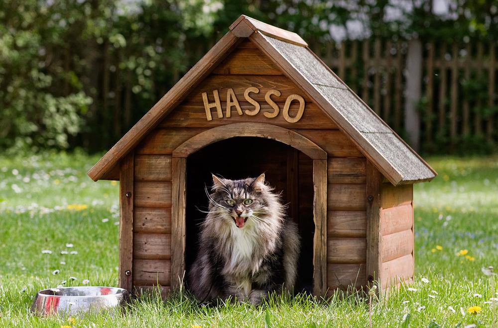 cats_01.jpg