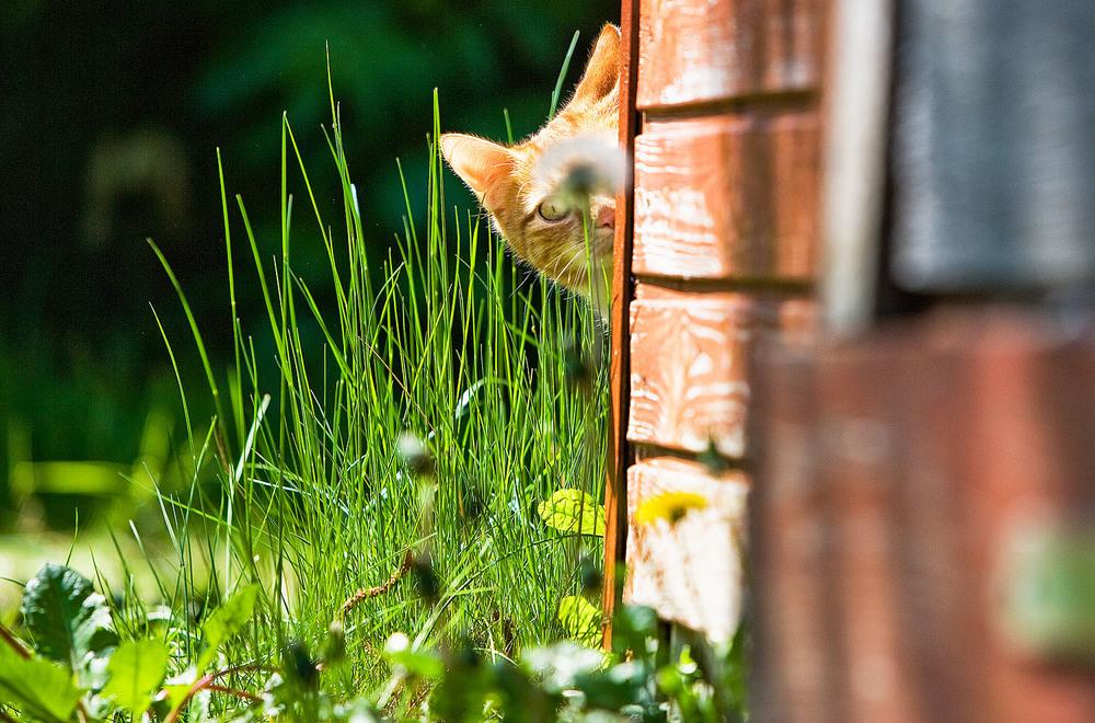 cats_02.jpg