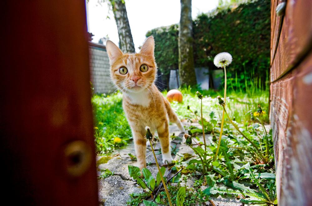cats_03.jpg