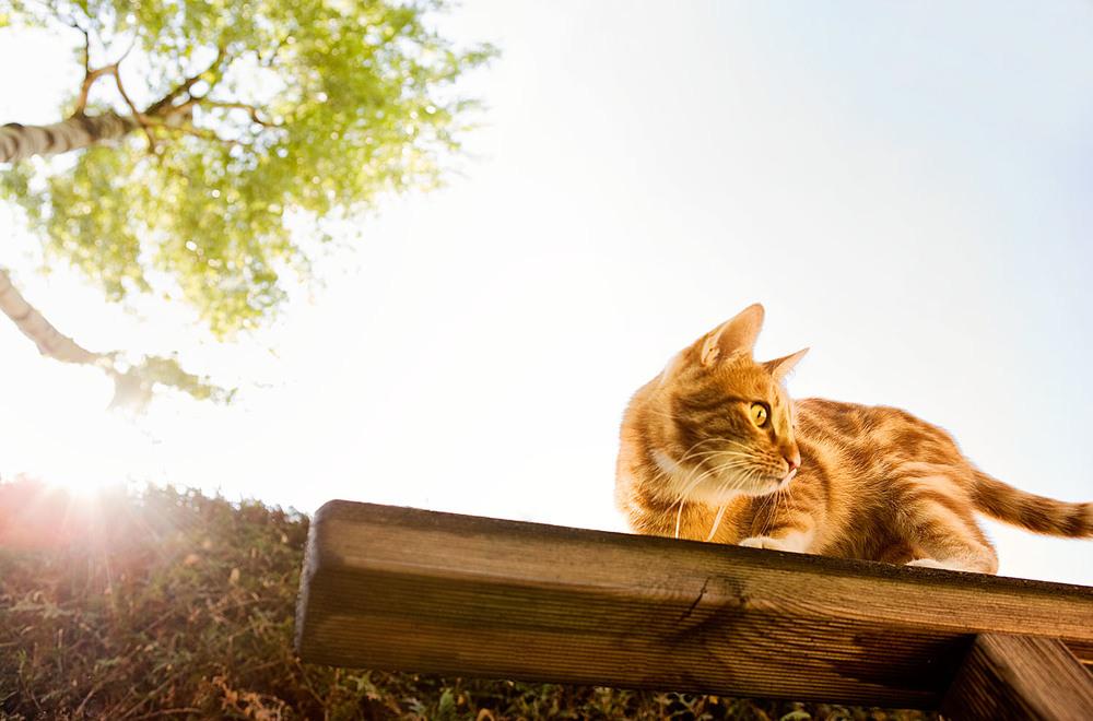 cats_05.jpg