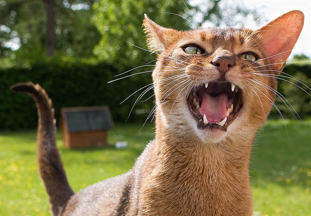 cats_07.jpg