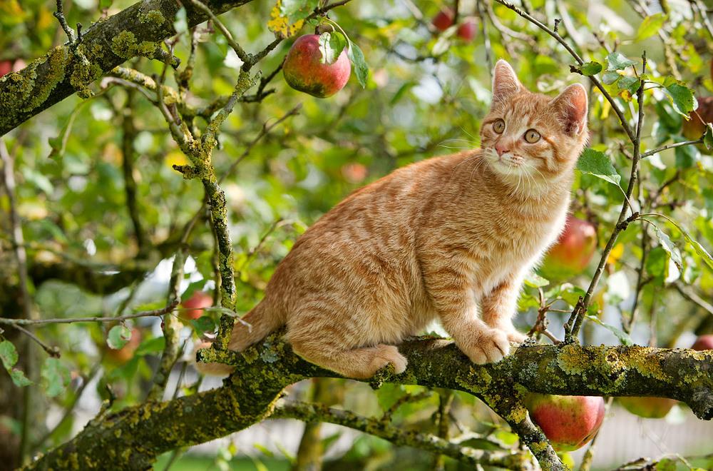 cats_09.jpg