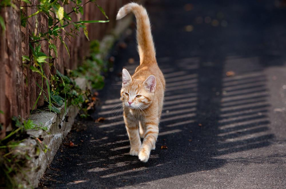 cats_12.jpg