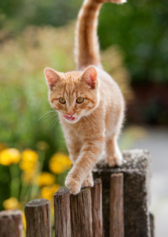 cats_13.jpg