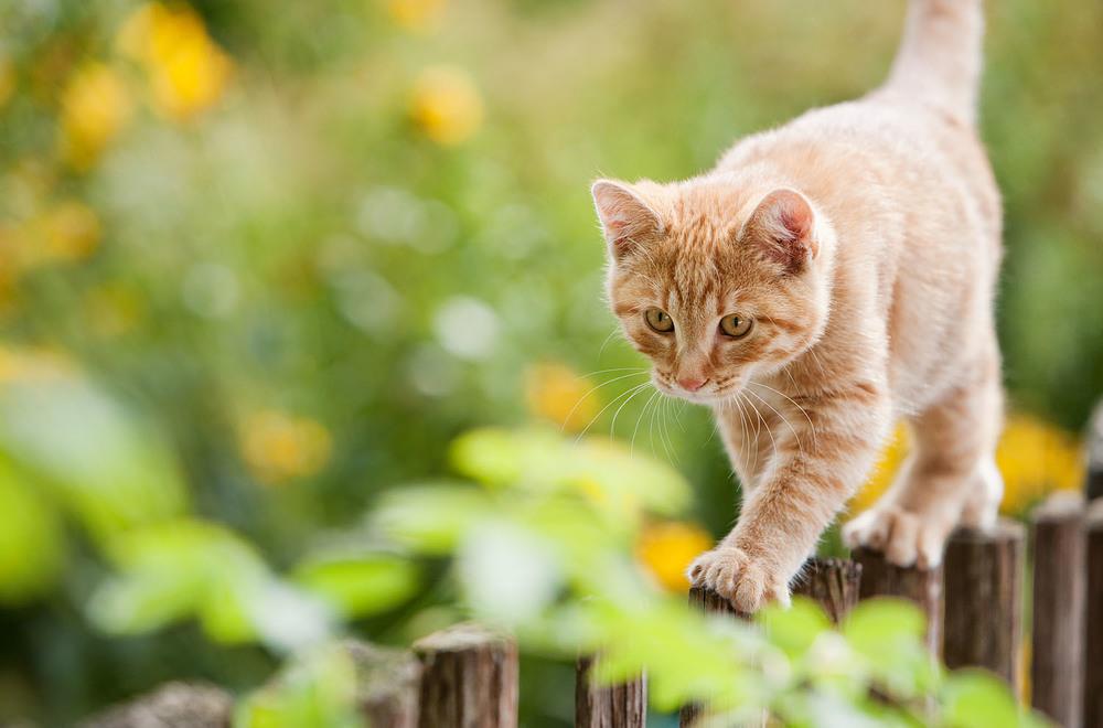 cats_14.jpg