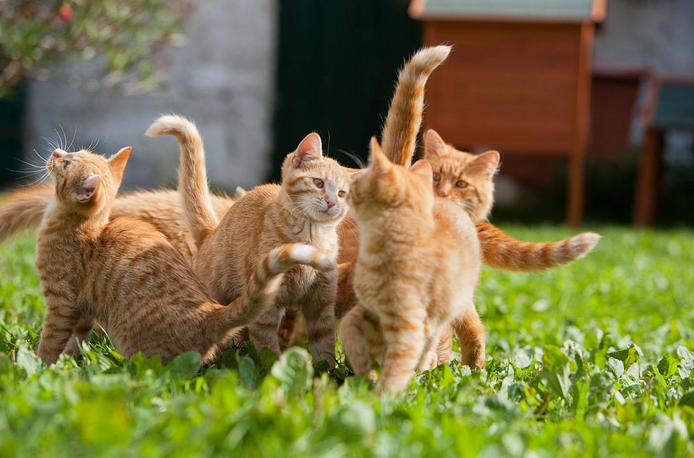 cats_19.jpg
