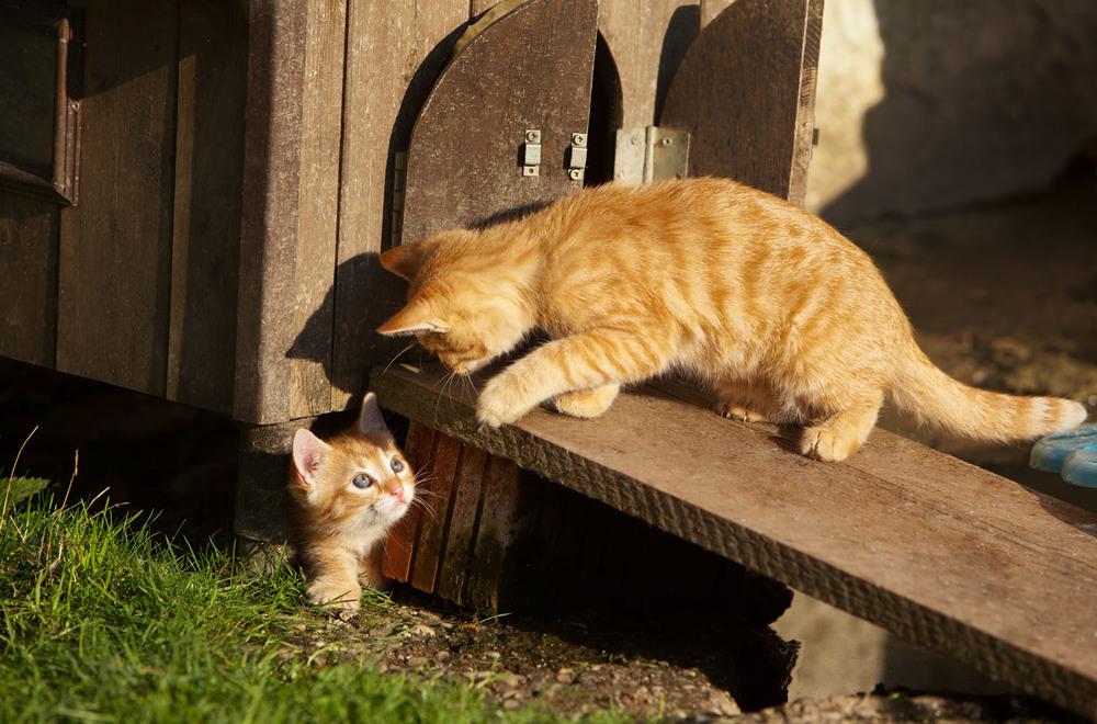 cats_25.jpg