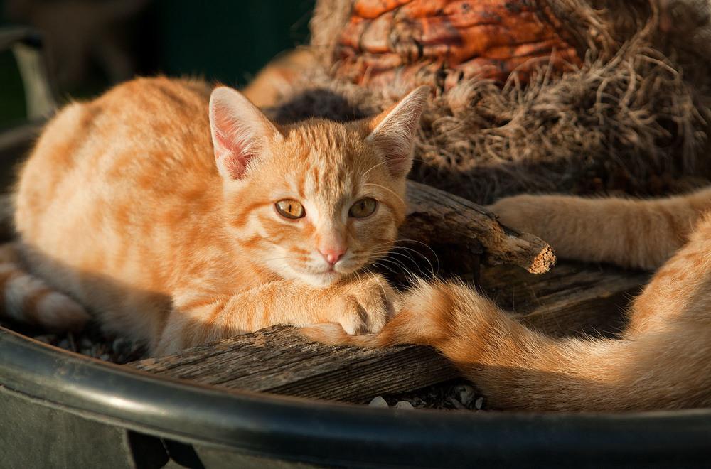 cats_26.jpg