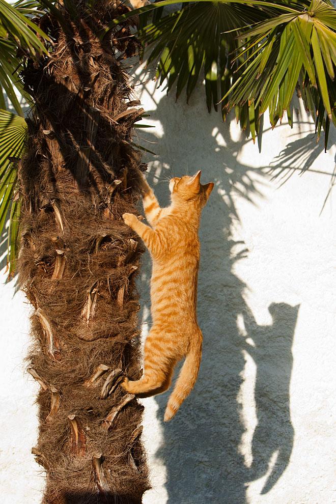cats_29.jpg