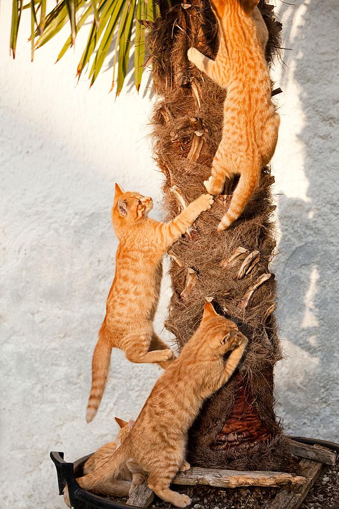 cats_30.jpg