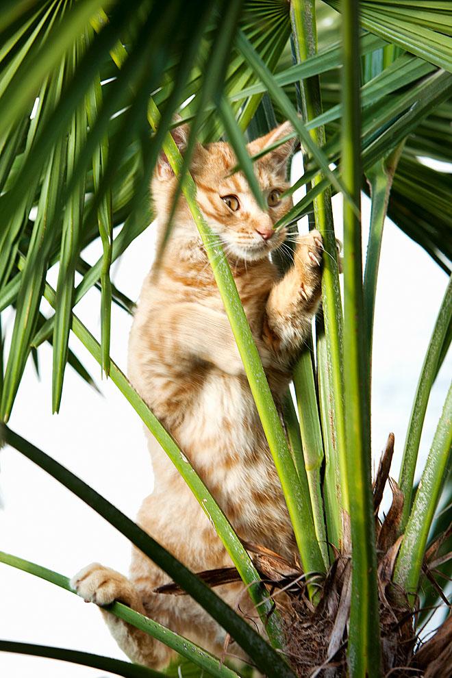 cats_31.jpg