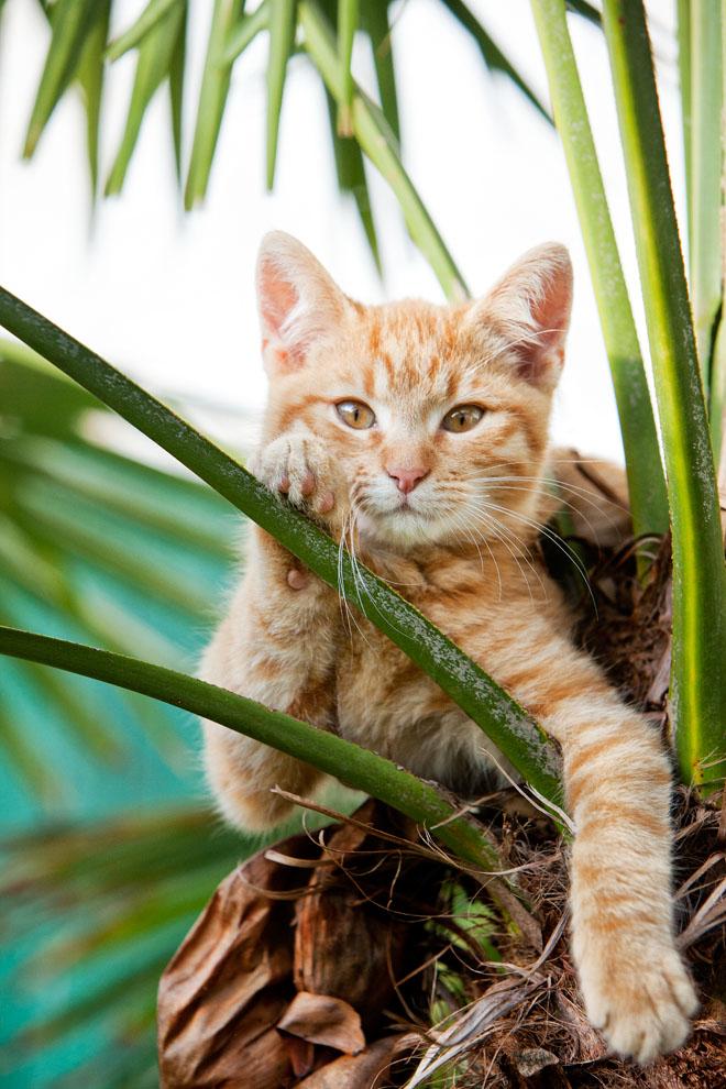 cats_33.jpg