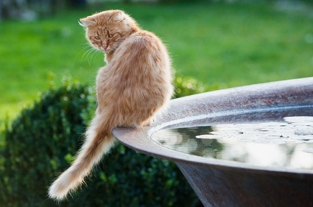cats_36.jpg