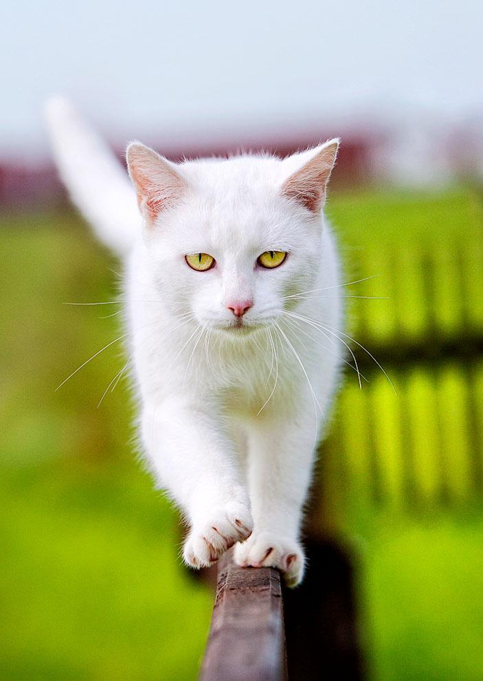 cats_10.jpg