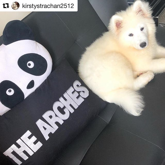 Cutest dog 🖤🐶 #Repost @kirstystrachan2512 with @get_repost ・・・ Wee Oreo Representing 💙 #samoyed #puppy #thearchesglasgow #arches @archesglasgow