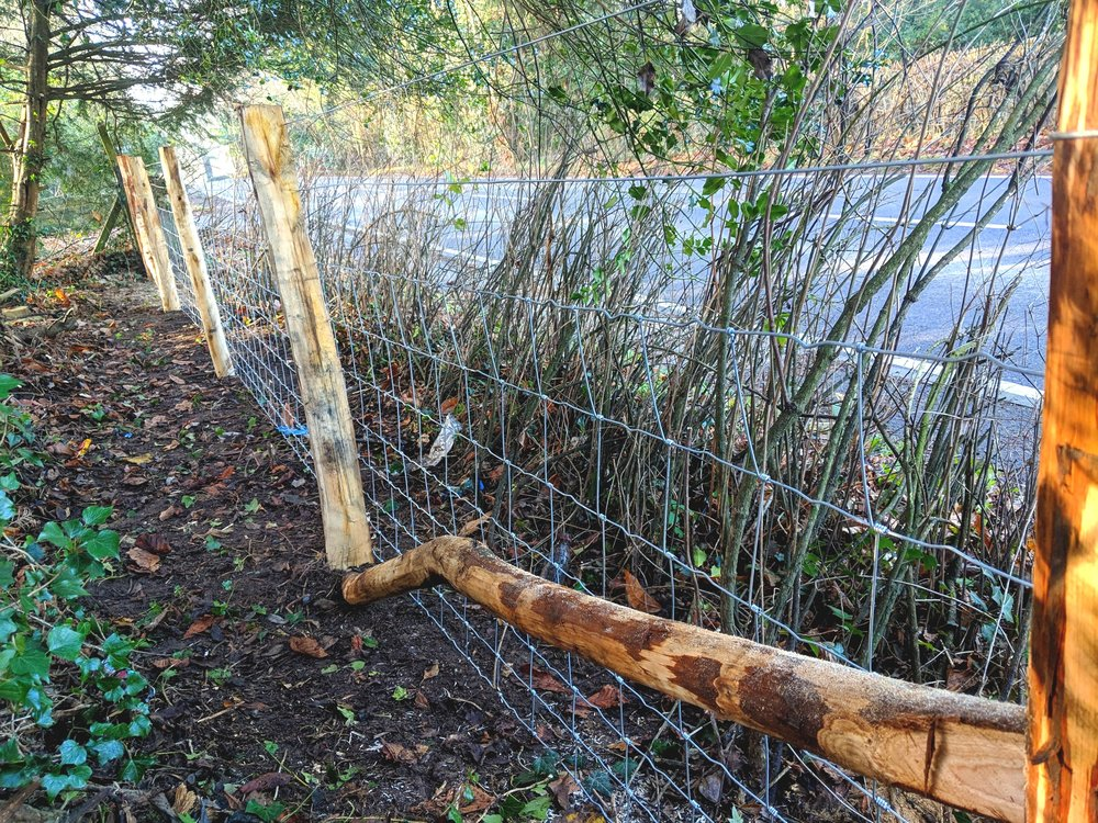 Chestnut stock fence