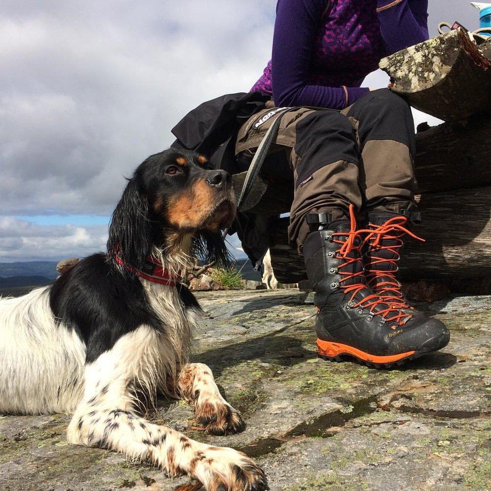 PÅ PLASS: Timer med trening betaler seg ute på tur, når hunden gjør akkurat som den skal.