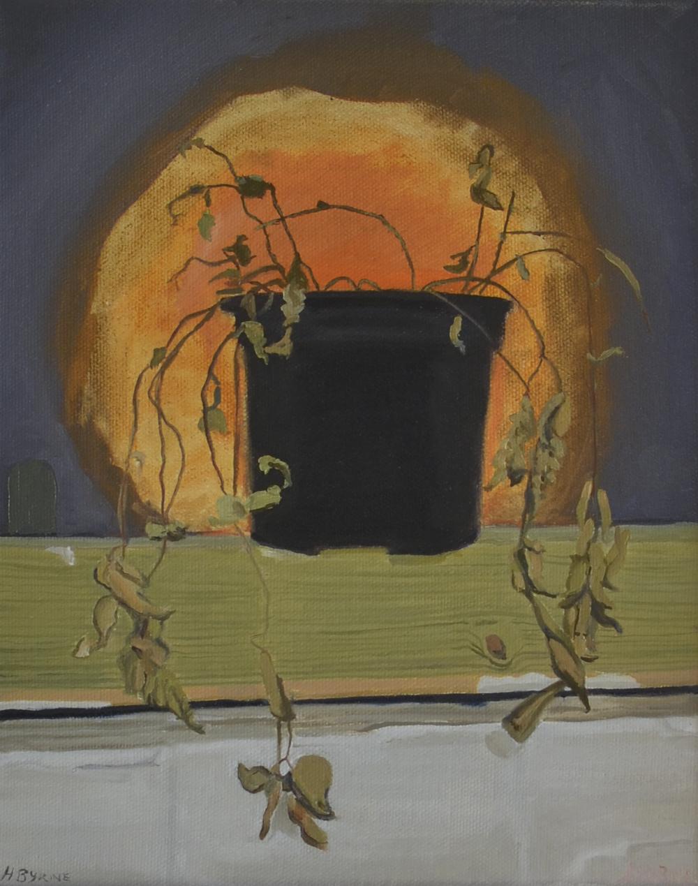 plant at night, night light, henry byrne