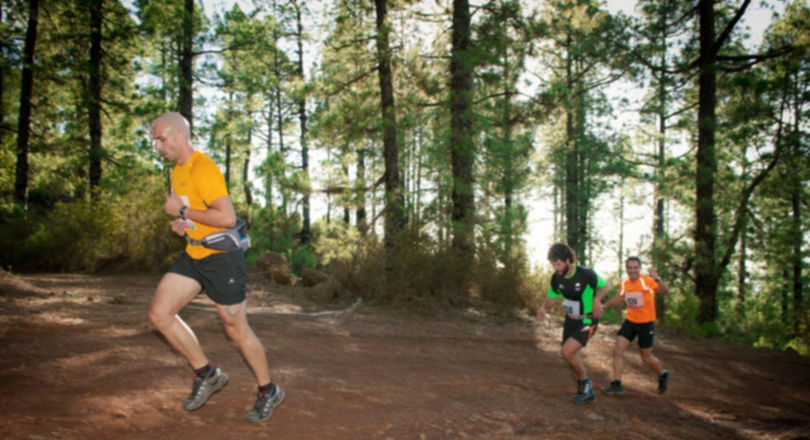 Biegaj po lesie!