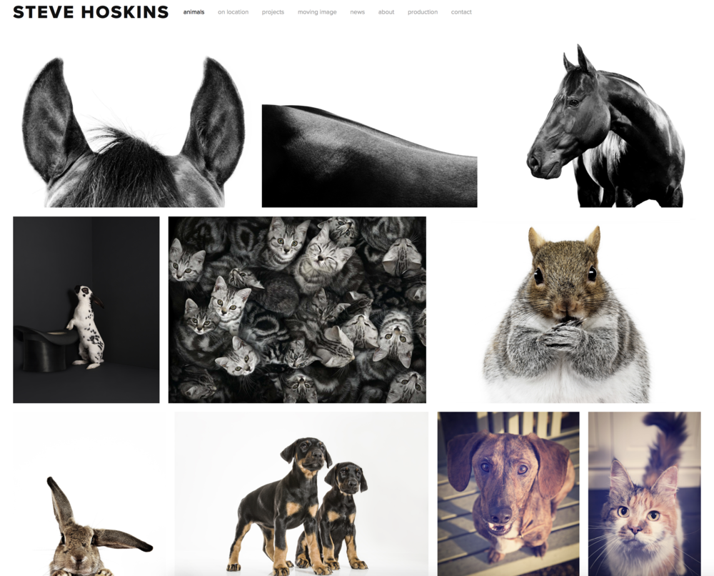 Steve Hoskins new website animal photography