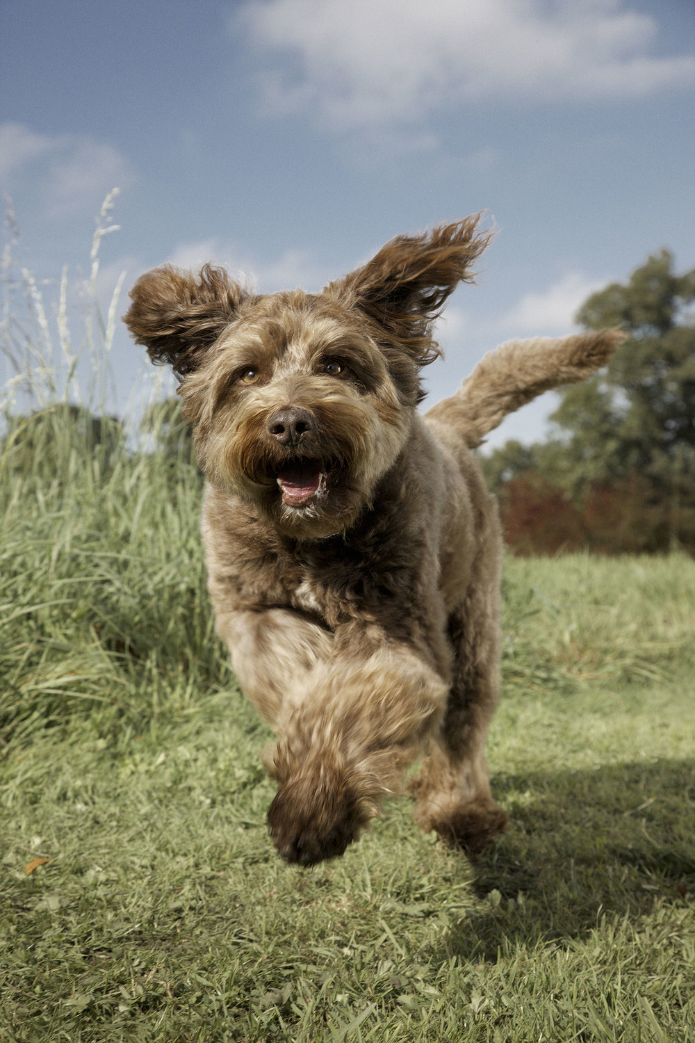 Dog running in field photograph