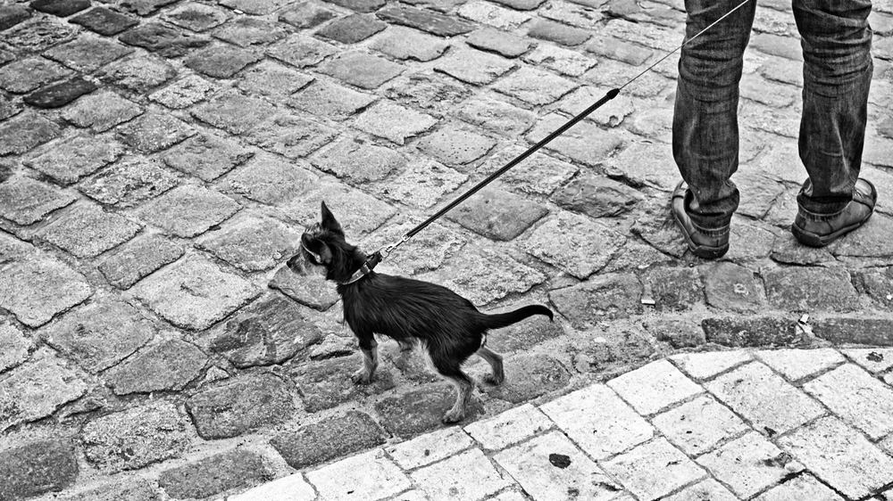 Street dogs photo