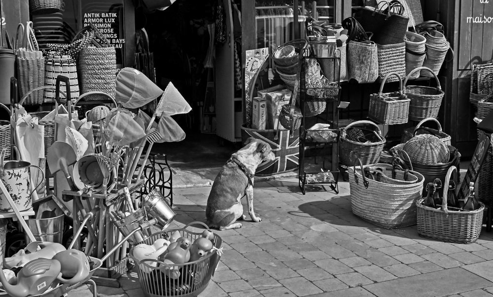 Photo of street dog in market