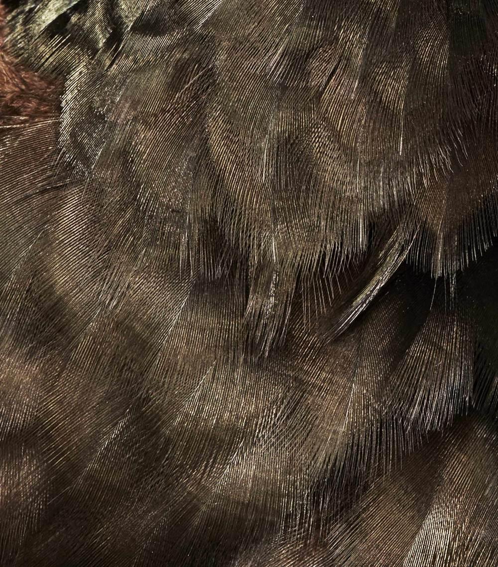 Vulture_SJH7009.jpg