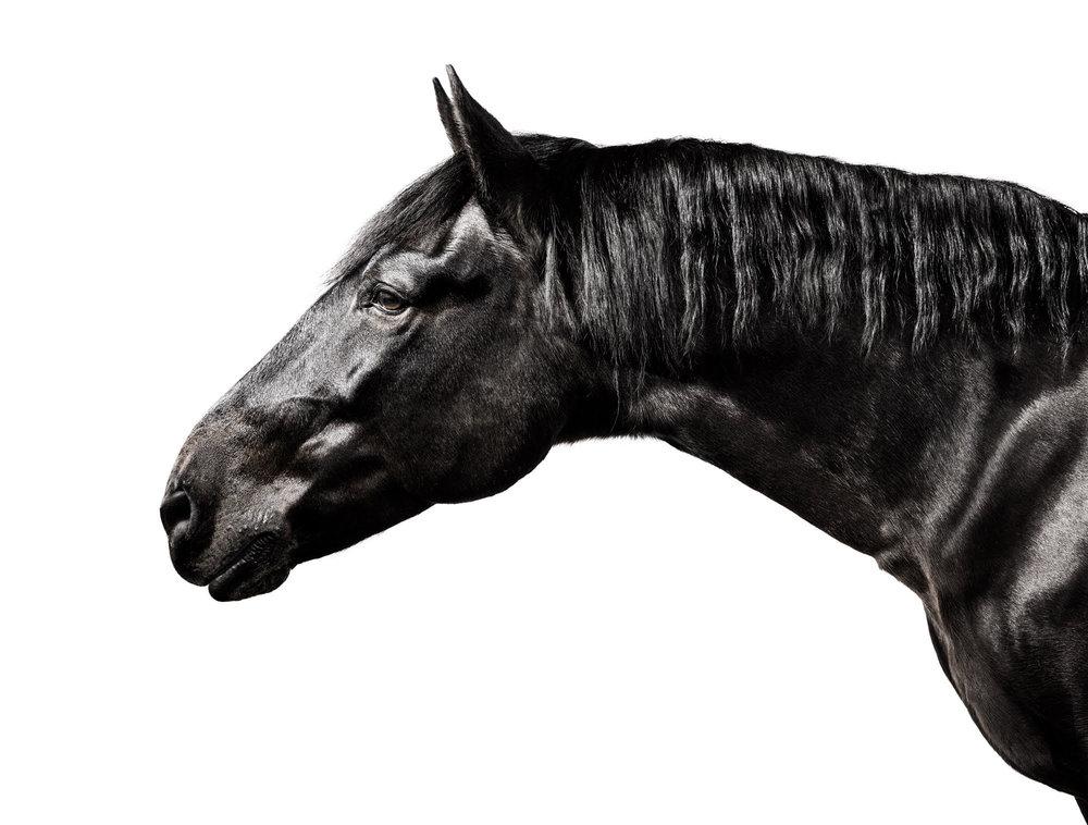Black Horse 1.jpg