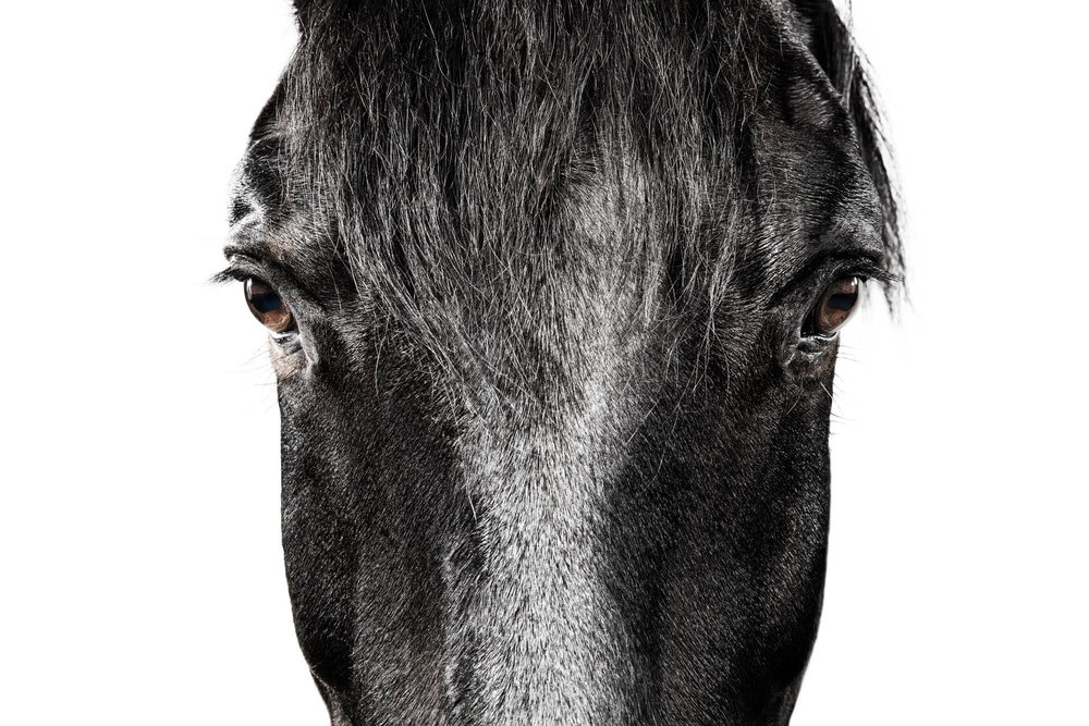 Black Horse 3.jpg