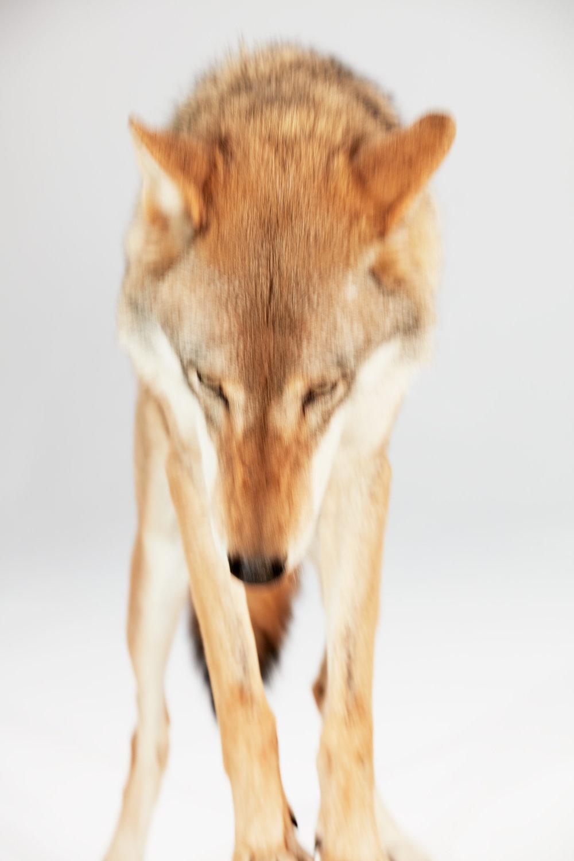 180918_Nike_Wolf_SH04_005.jpg
