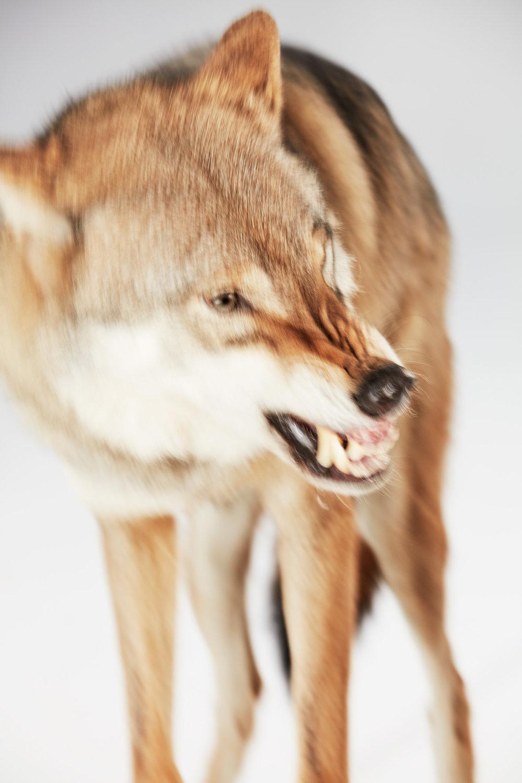 180918_Nike_Wolf_SH04_052.jpg