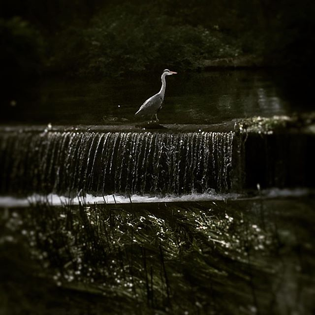 Saw a birdie by the canal