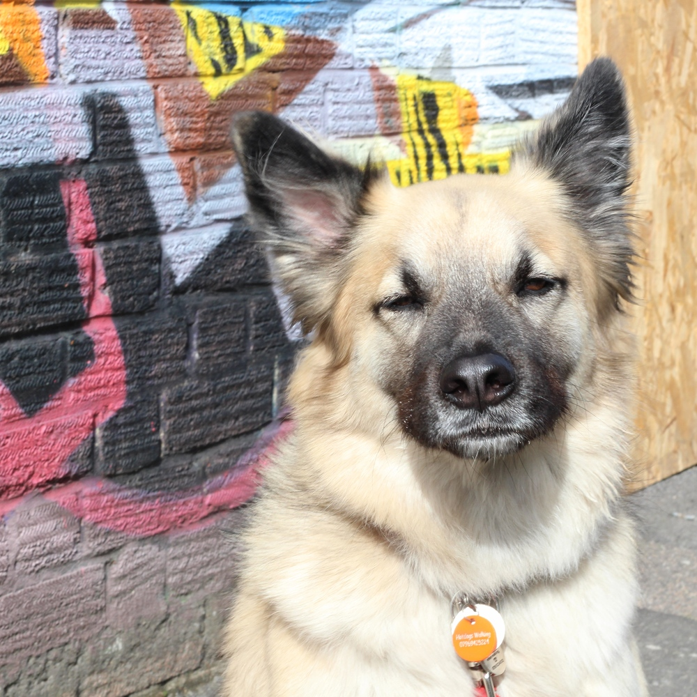 Street Dog Stylin'