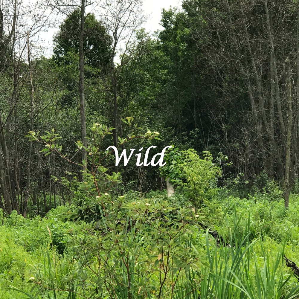 Wild- wild.jpg