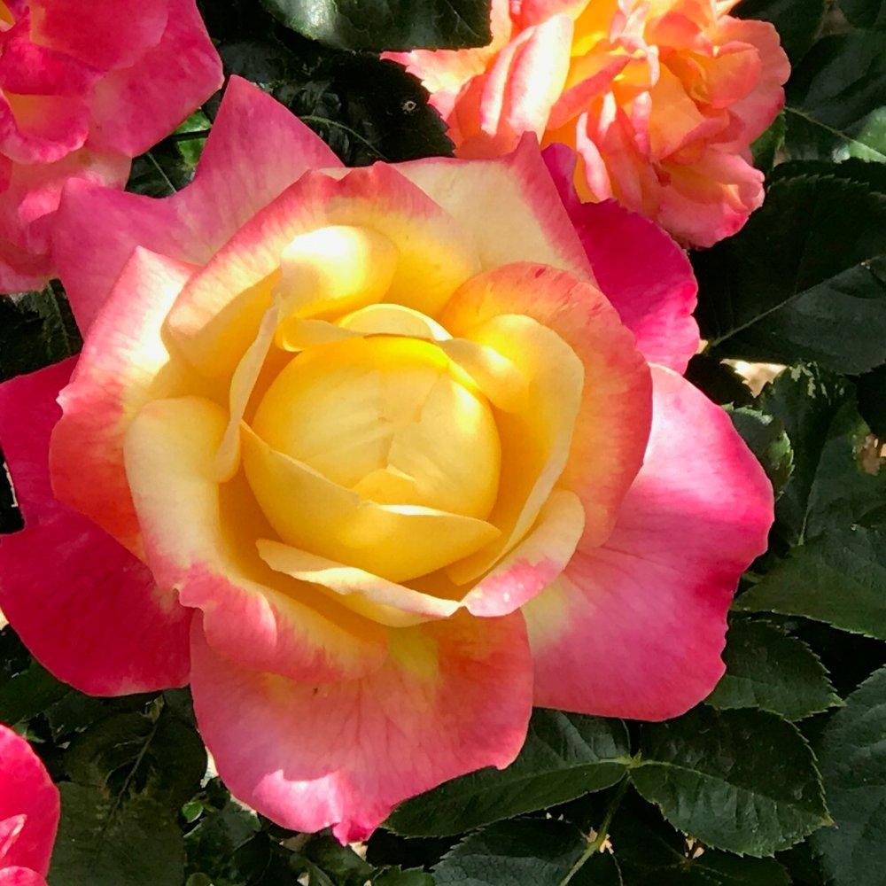Begin flower.jpg