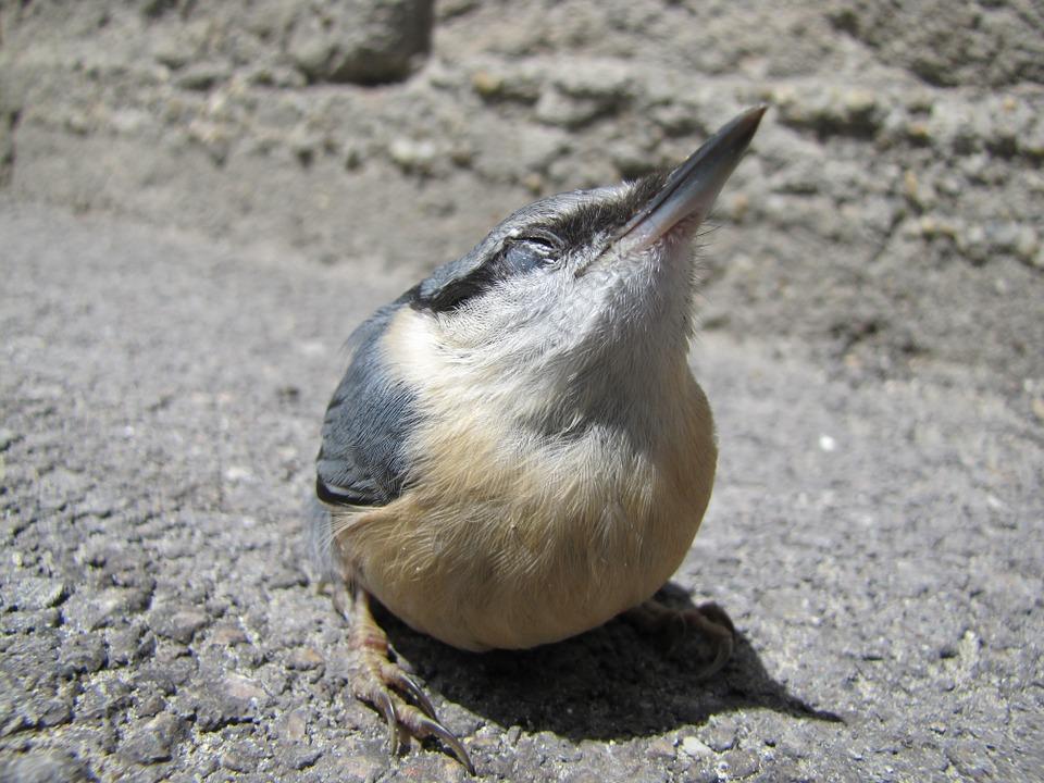 bird-115026_960_720.jpg