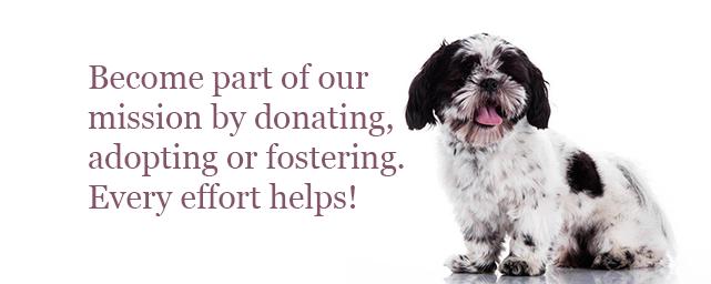 Donate Bluegrass Shih Tzu Rescue