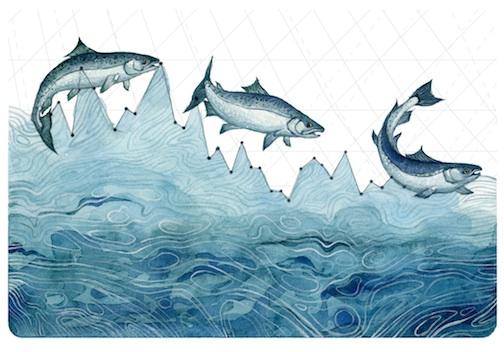 Salmon Population Decline