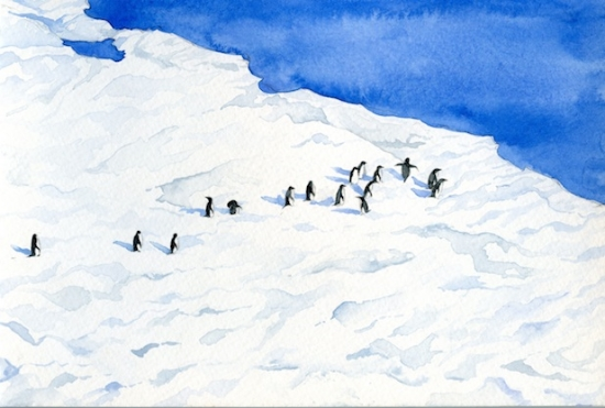 Adelies Near McMurdo is a watercolor inspired by my photographs of Adelie Penguins near McMurdo Base in Antarctica. Penguins are very social and quite goofy on land, and I enjoyed watching them from the cliffs above as they waddled around on the ice and then returned gracefully to the water.