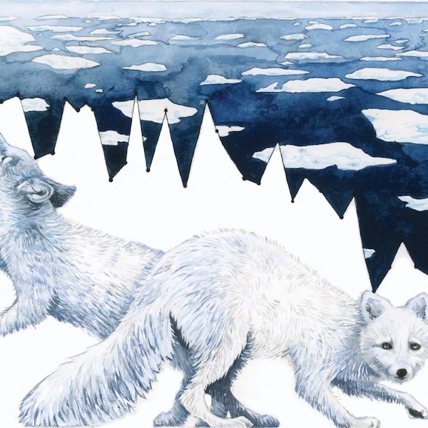 Habitat Degradation: Arctic Sea Ice Melt