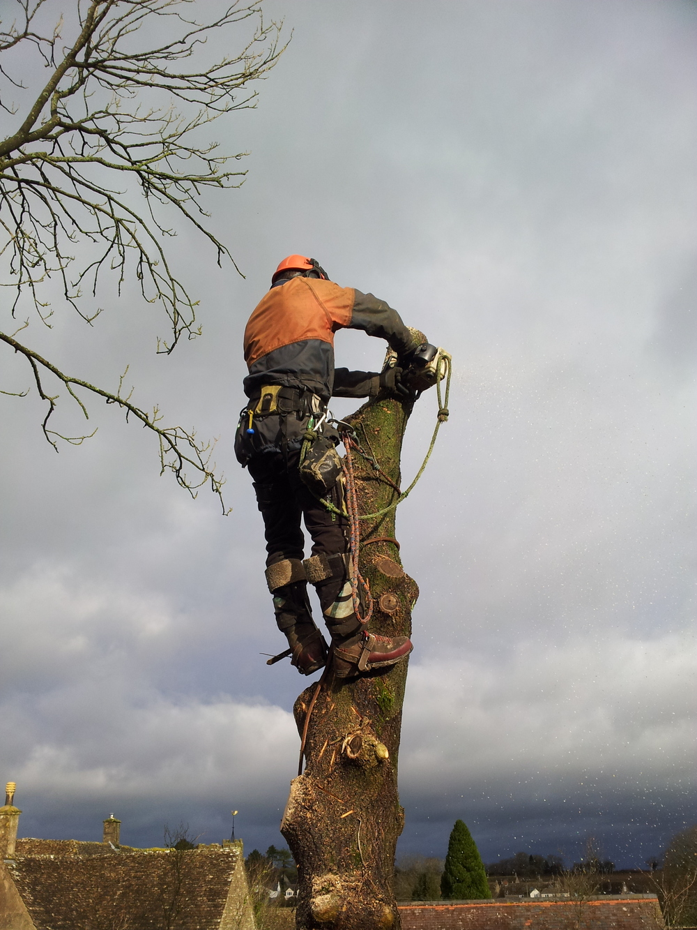 EcoCon offer a full range of tree surgery services to our clients.