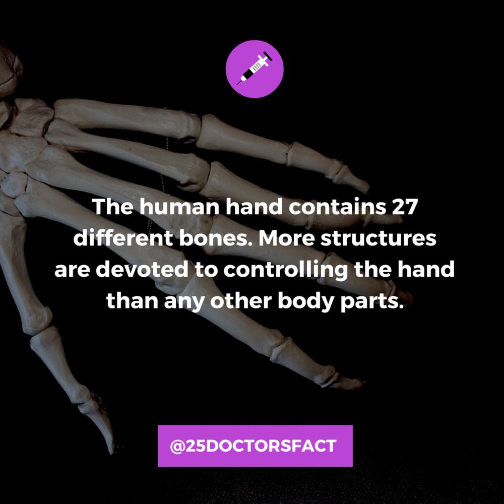 The hand has 27  different bones.