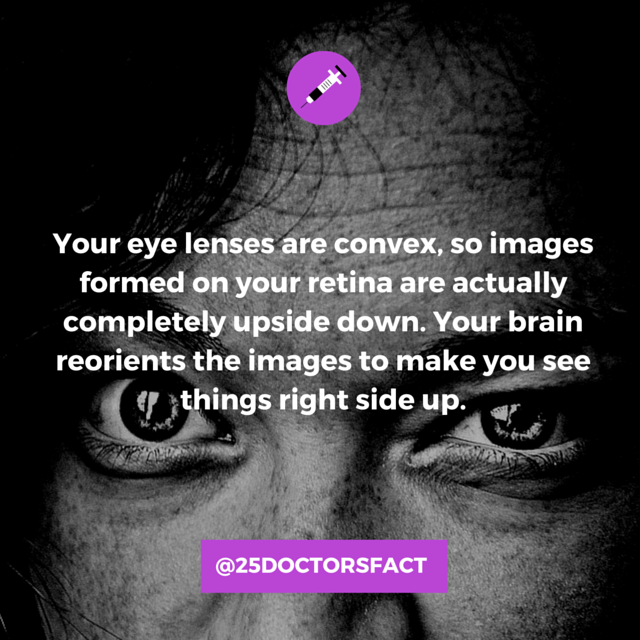 images your eyes see are upside down.