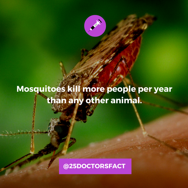 mosquitoes deadliest animals on earth