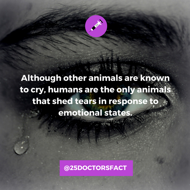 humans only species that shed emotional tears