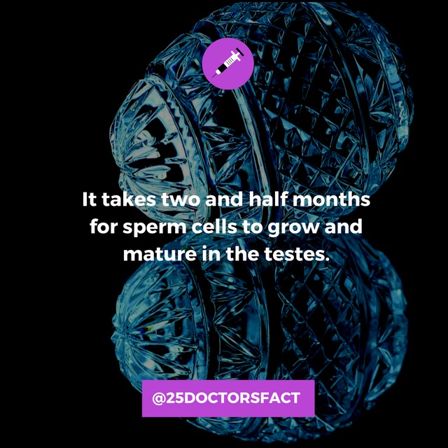 sperm growth and maturation